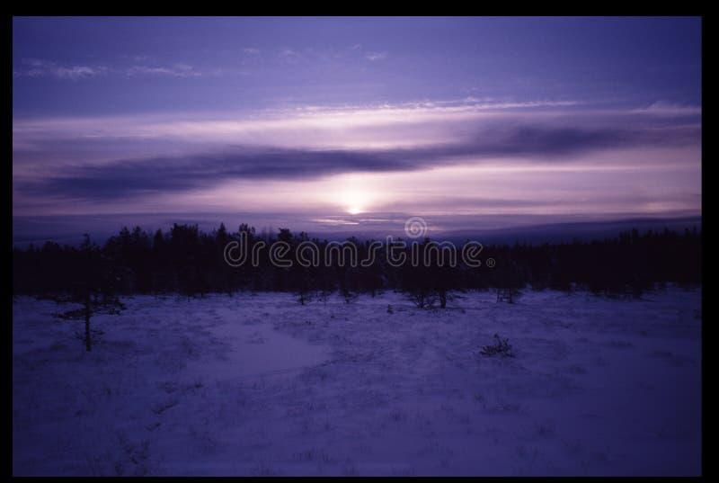 Koude zonsondergang in bevroren moerasmidden van de winter stock fotografie