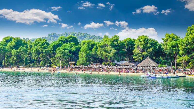 Koukounaries海滩,斯基亚索斯岛海岛,希腊 免版税库存照片