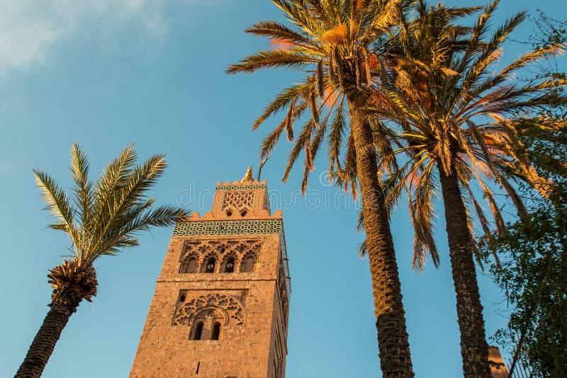 Koutoubia moské och palmträd i Marrakech på aftonen royaltyfria bilder