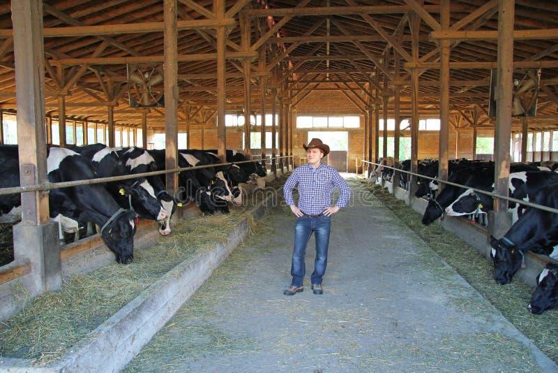 Kowboj TARGET554_0_ i Krowy, obrazy stock