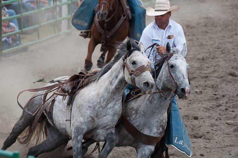 Kowboj z jarzębatymi szarymi koniami przy rodeo obrazy royalty free