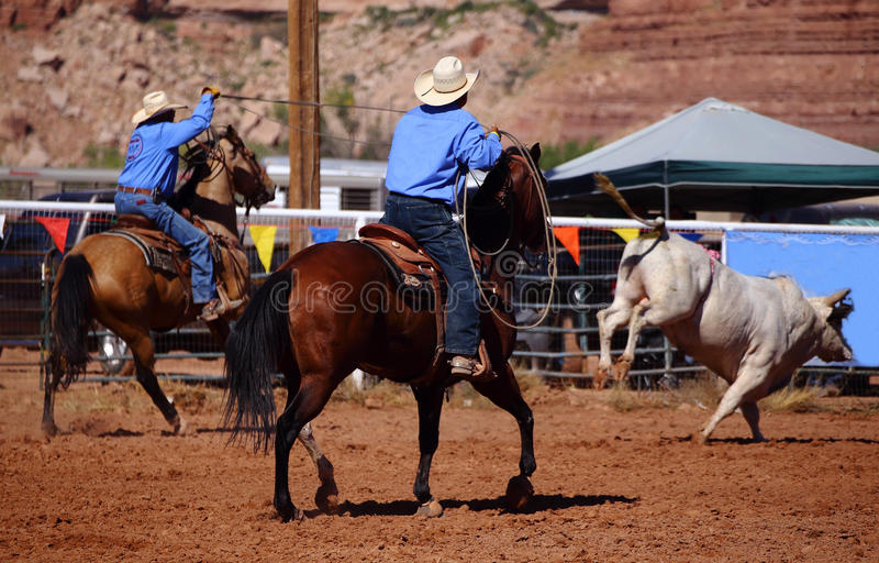 Kowboje i byk obraz stock
