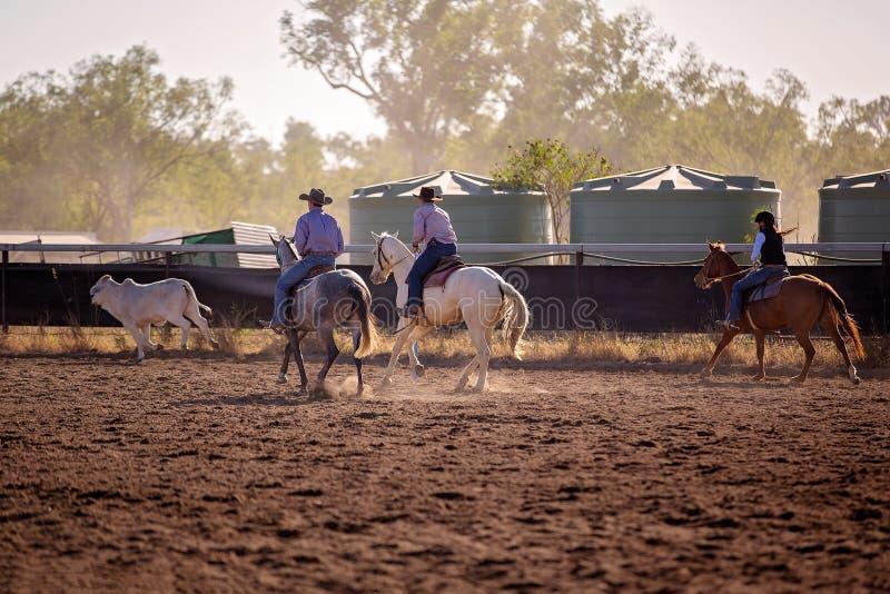 Kowboje I Cowgirl Gromadzi się łydki Przy rodeo obrazy royalty free