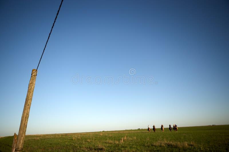 Kowboje jedzie w zielonych paśniki przy zmierzchem fotografia royalty free