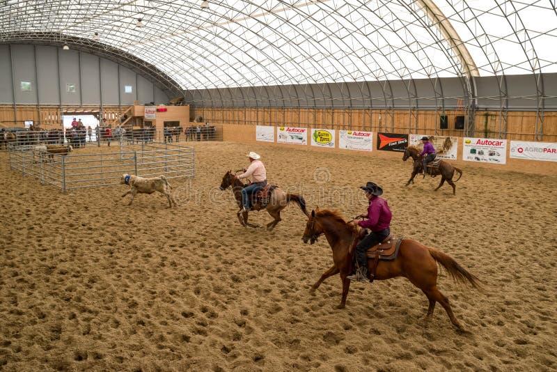 Kowboje na koniach przy rodeo przedstawieniem obrazy royalty free