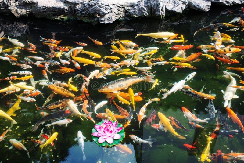 Koy fisk i det Jade Buddha Temple shanghai porslinet royaltyfria foton