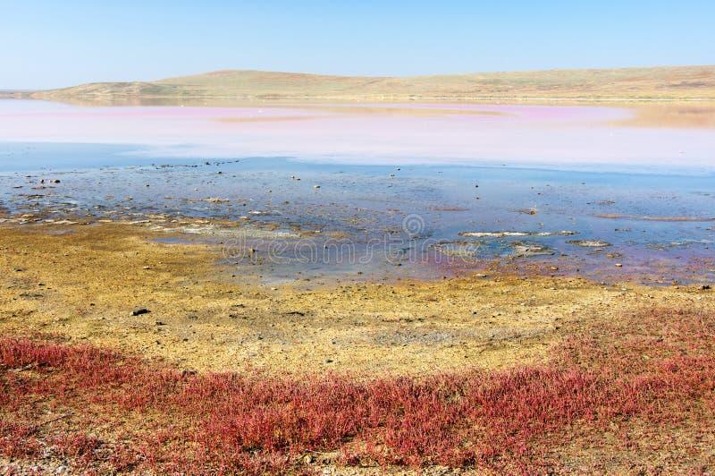 Koyashskoye salt sjö arkivbild