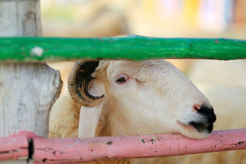 kozy obraz stock