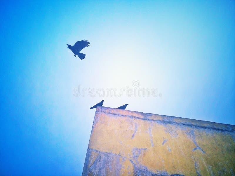 krähe stockbilder