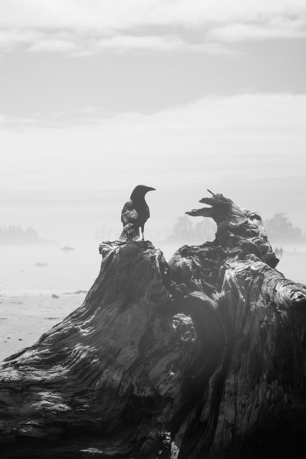 Krähe, die auf einem Klotz am Strand bedeckt im Dampf und im Nebel sitzt stockfotografie