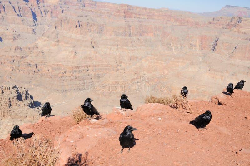 KRÄHEN von Grand Canyon lizenzfreie stockbilder