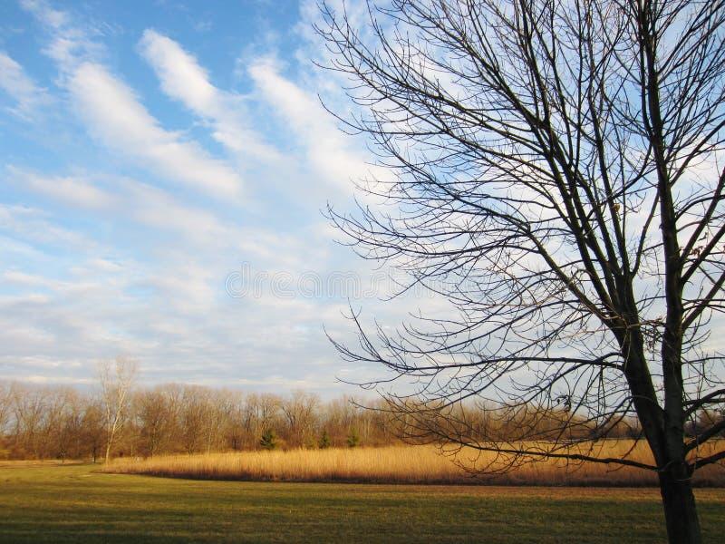 Kräuselungs-Wolken stockfotos