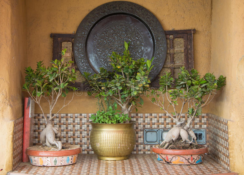 Kräuter auf den Tabellen an der arabischen Küche lizenzfreies stockbild
