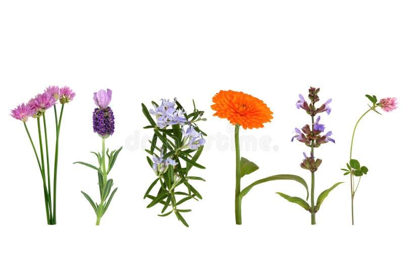 Kräuter in der Blume lizenzfreies stockfoto