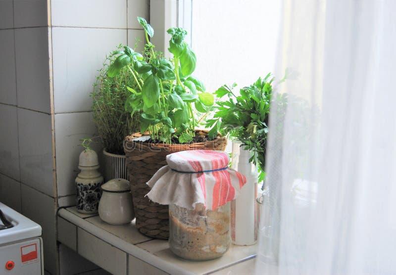 Kräuter, Die In Der Küche Wachsen Stockbild - Bild von ...