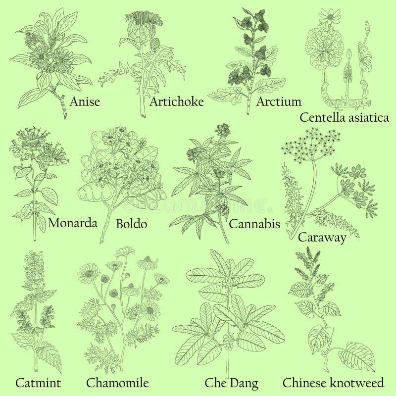 kräuter Illustration von Anlagen in einem Vektor mit Blume für Gebrauch stock abbildung