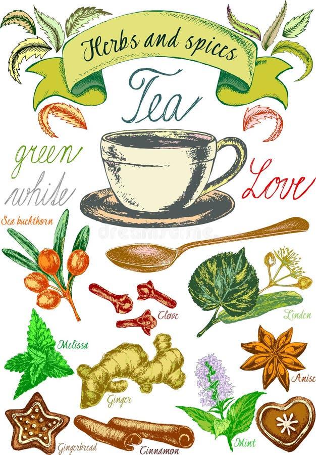 Kräuter und Gewürze, Teesatz, Teeblätter für Teevorbereitung, Weinlesevektorgraphik mit Kräutern stock abbildung