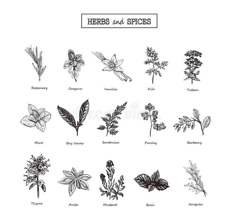 Kräuter und wilde Blumen botanik Satz 15 Universalschablone für Grußkarte, Webseite, Hintergrund Auch im corel abgehobenen Betrag stockfoto
