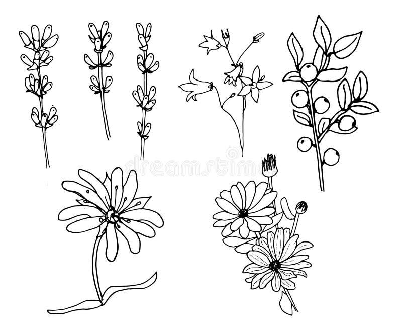 Kräuter und wilde floweres Stellen Sie von den Botanikblumen ein Hopfen vektor abbildung