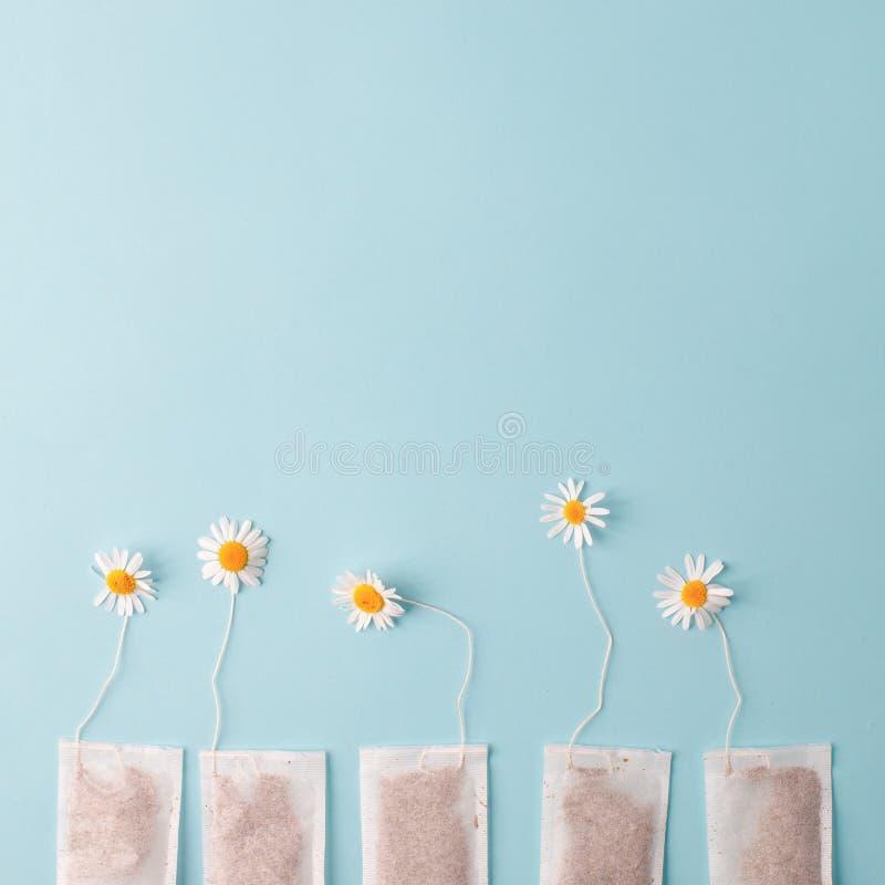 Kräuteralternativmedizin-Reihe: Kamillenblumen und -teebeutel auf blauem Hintergrund Saisonantikrise, Magen und Kälten lizenzfreies stockbild
