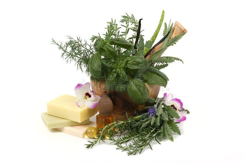 Download Kräutertherapie stockbild. Bild von würzig, aloe, orchidee - 9079947