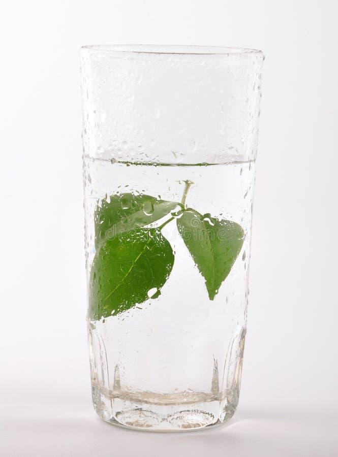 Kräuterwasser lizenzfreie stockbilder