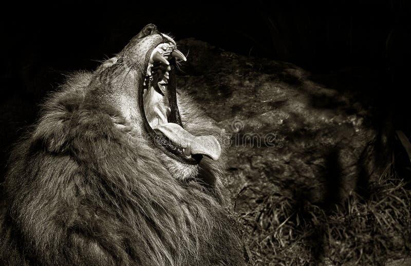 Królewiątko dżungla zdjęcia royalty free