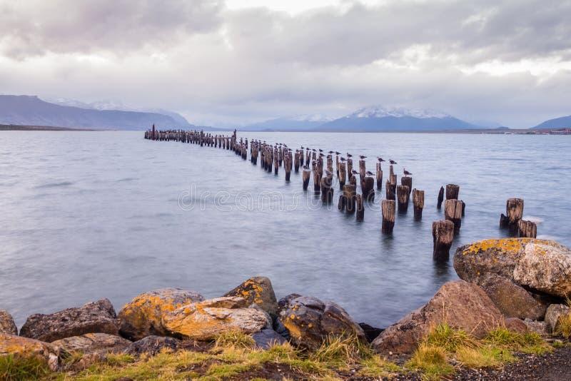 Królewiątko kormoranu kolonia, Stary dok, Puerto Natales, Antarktyczny Patag zdjęcia stock