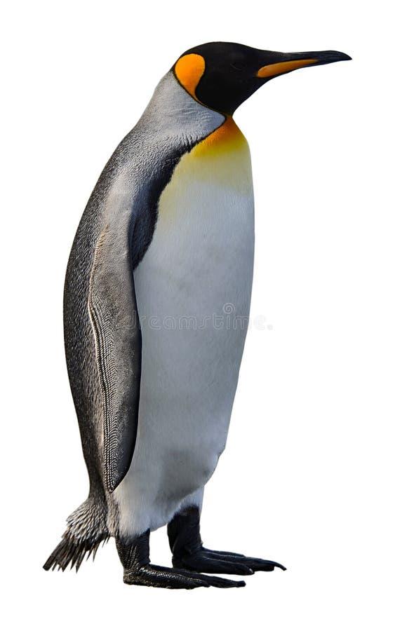 Królewiątko pingwin odizolowywający na bielu obrazy royalty free