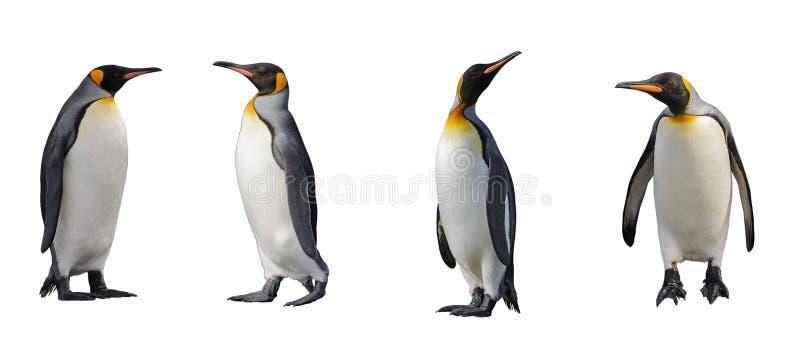 Królewiątko pingwiny odizolowywający obrazy stock