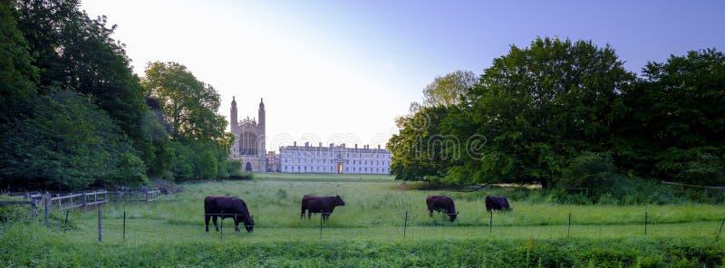 Królewiątko, s szkoła wyższa przez plecy, Cambridge, UK zdjęcia royalty free