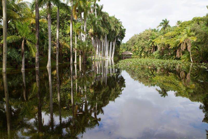 Królewscy drzewka palmowe odbija w czapeczka domu lenieją zdjęcie royalty free