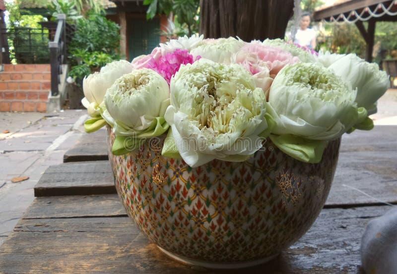 Królewski lotos w klasycznym pucharze w ogródzie fotografia royalty free