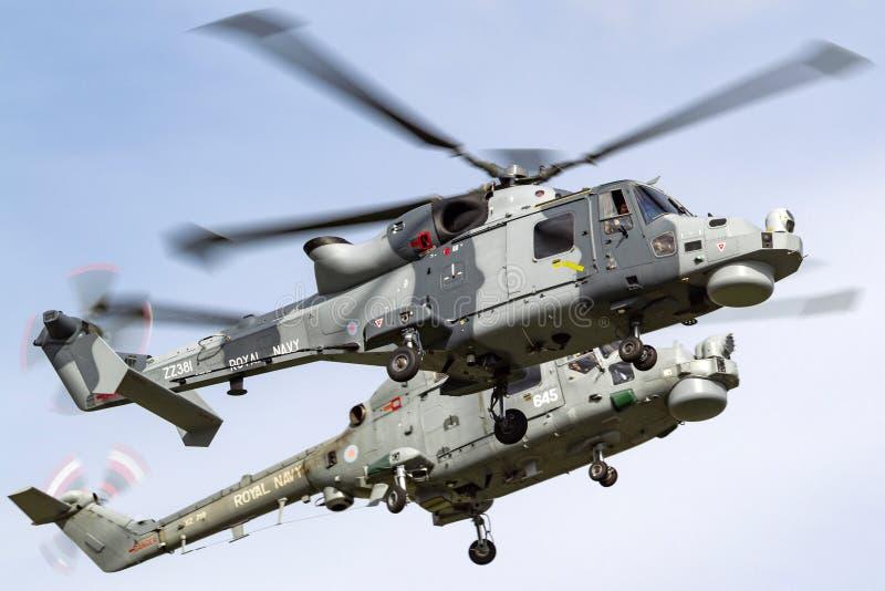 Królewski marynarki wojennej floty Lotniczej ręki AgustaWestland żbik HMA 2 helikopterów latanie w formaci z Westland rysia helik obraz royalty free