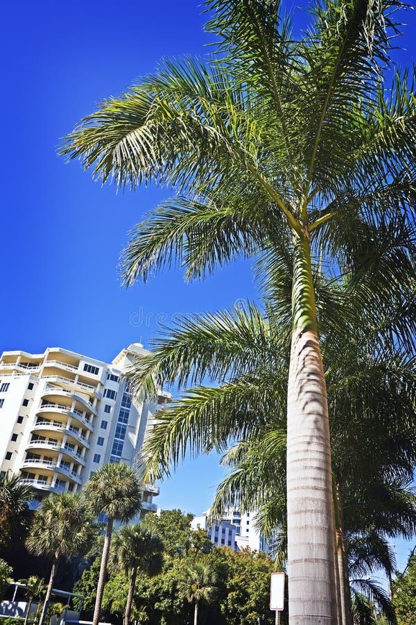 królewskie budynek palmy zdjęcia stock