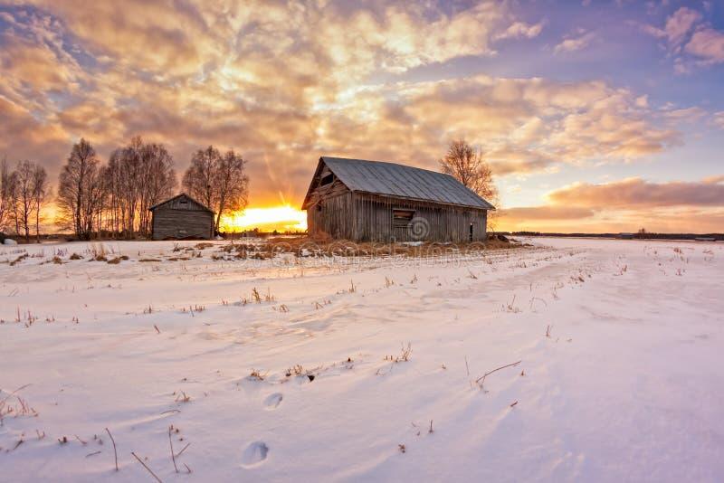 Królików odciski stopy Na śniegu fotografia stock