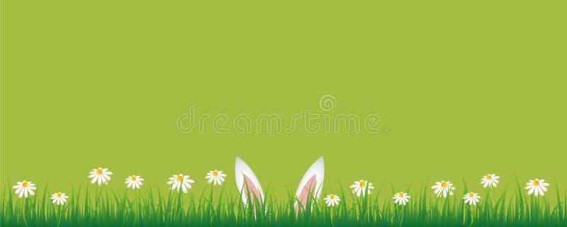 Królików ucho w zielonej łące z białej stokrotki kwiatów zielonym sztandarem z kopii przestrzenią royalty ilustracja