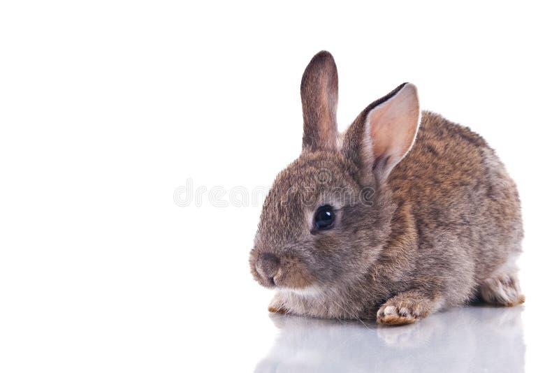 królik śliczny zdjęcie stock