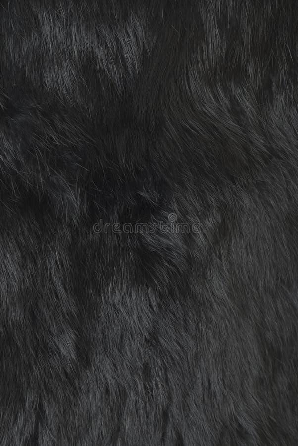 królik futerkowa tekstura zdjęcie royalty free