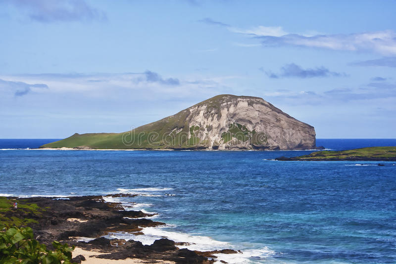 Królik Wyspa Hawaje obraz royalty free