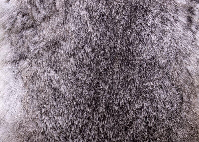 Królika futerko zamknięty w górę popielatego tekstury tła materiału fotografia stock
