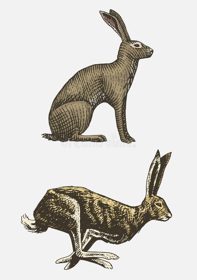 Królika lub zając obsiadania dzikie zwierzęta w roczniku rysujący, grawerujący, lub retro styl, zoologia ustalony europejczyk ilustracji