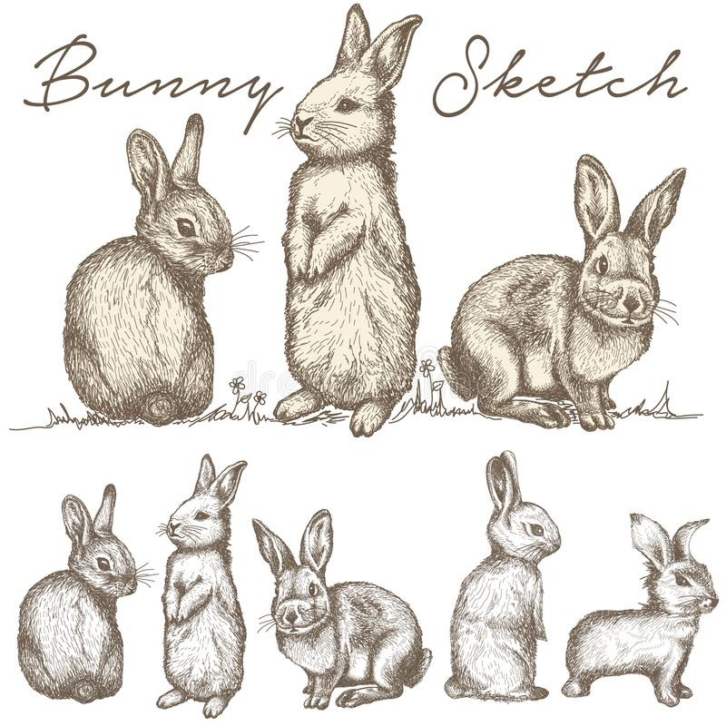 Królika królika nakreślenia ilustraci wektor ilustracja wektor