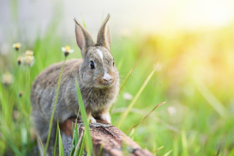 Królika obsiadanie na śródpolnej łące, Wielkanocnym króliku cegły i zieleni wiosny/tropi dla festiwalu na trawie zdjęcia stock