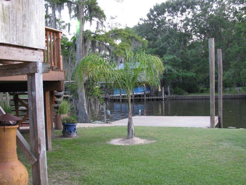 Królowych drzewka palmowe na rzece zdjęcia stock