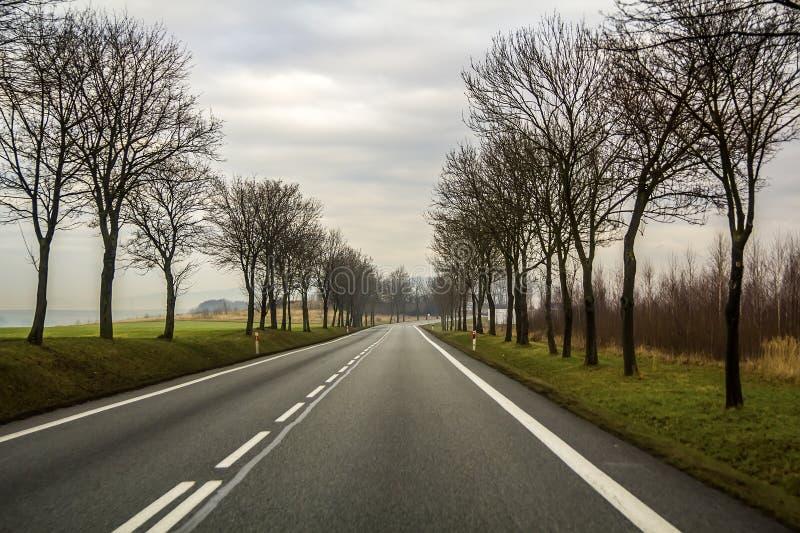 Krökt för landsväg för två gränd spolning till och med träd royaltyfri foto