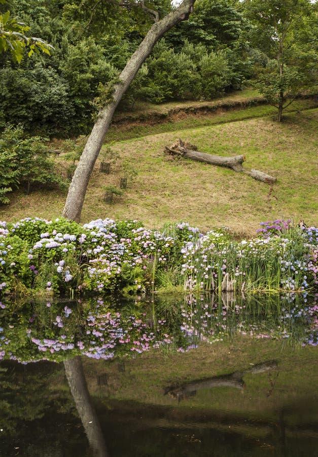 Krökt träd och reflexion på Trebah trädgårdar royaltyfri foto
