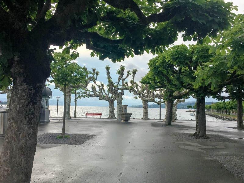 Kręceni drzewa przeciw niebu blisko jeziora zdjęcie royalty free