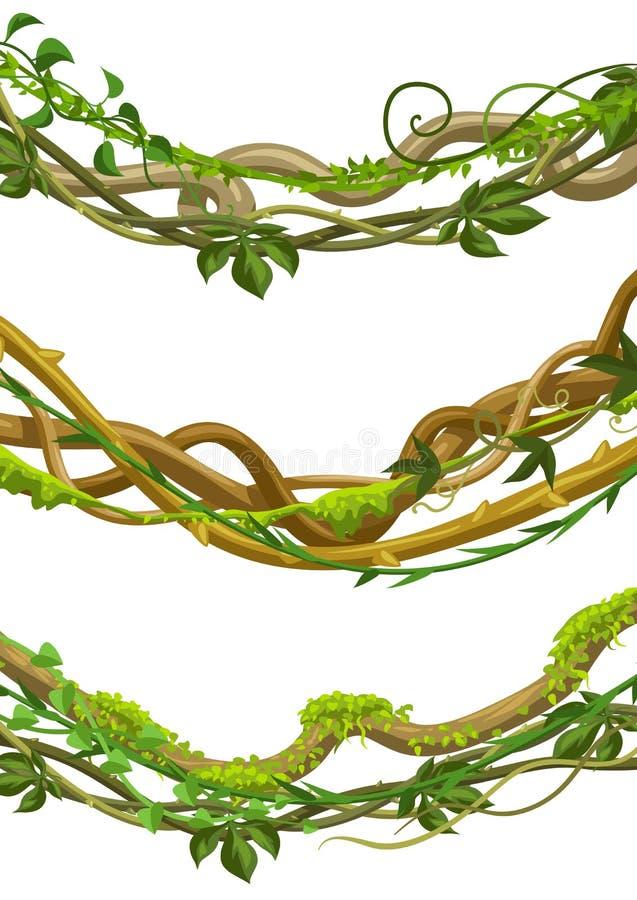 Kręcone dzikie lian gałąź ustawiać royalty ilustracja