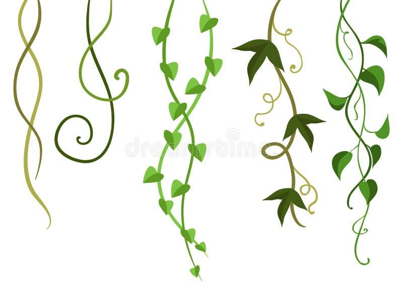 Kręcone dzikie lian gałąź ustawiać ilustracji